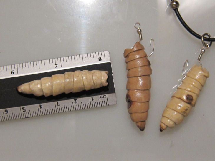 asticot-in-inches maggot